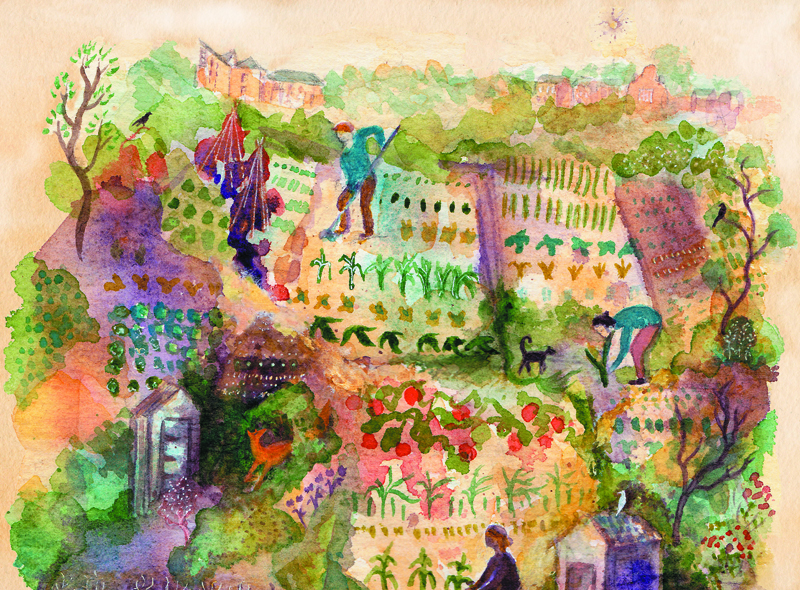 Ashley Vale Allotments by Emma Burleigh